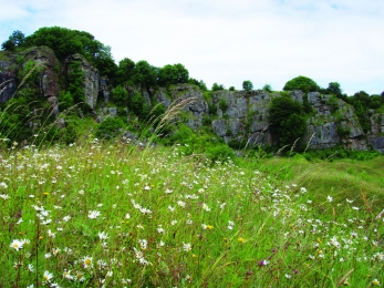 Image of Clints Quarry Nature Reserve