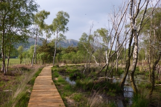 image of boardwalk path at Foulshaw moss