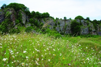image of wild flower daisies and limestone rock formations at clints quarry nature reserve