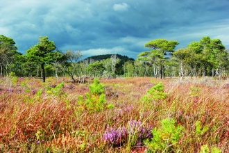image of Meathop moss nature reserve landscape