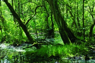 Image of wet woodland at Next ness reserve -c- john morrison