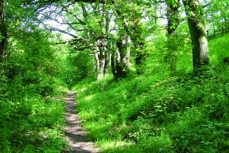 image of path and woodland at Quarry banks reserve