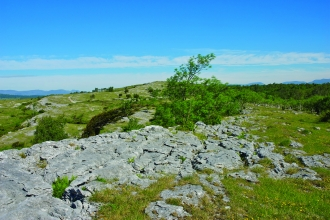 image of limestone pavement at whitbarrow hervey memorial reserve - copyright john morrison