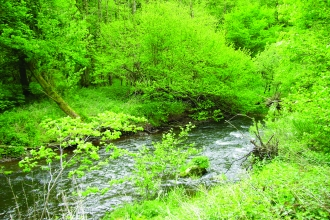image of river and woodland at wreay woods nature reserve
