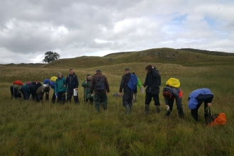 Looking for tawny sedge at Eycott Hill