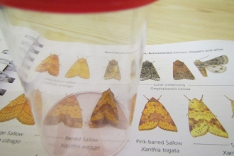 Moth ID course at Eycott Hill