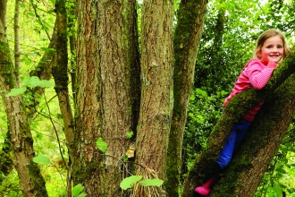 Child in tree at Wreay Woods Nature Reserve