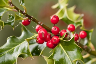 Holly berries and leaves - copyright Ross Hoddinott/2020VISION