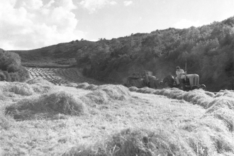 Traditional haymaking in the Lake District