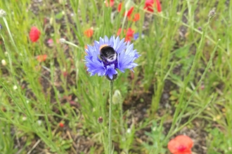 Wildflowers and bee at Vulcan Park