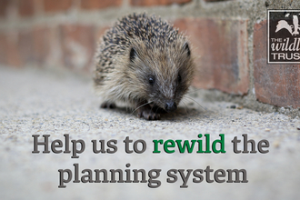 Image of hedgehog - Help us to re-wild the planning system