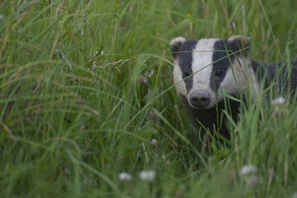Image of badger © Bertie Gregory/2020VISION