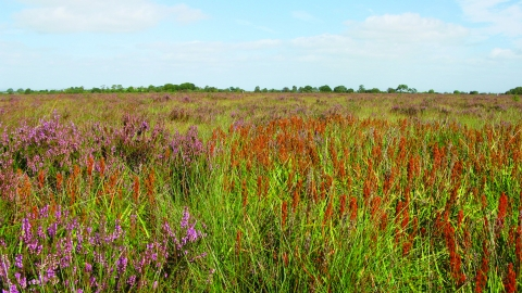 image of Drumburgh moss nature reserve