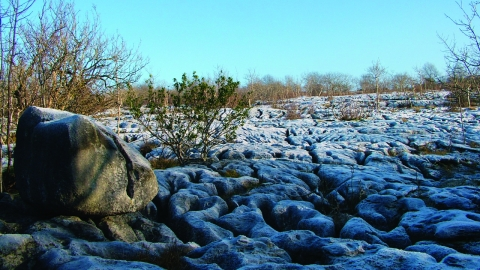 image of limestone pavement hutton roof crags nature reserve