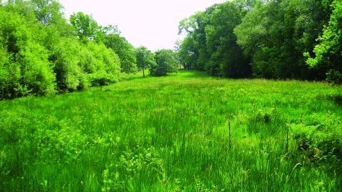 image of grassland and woodland at Orton moss nature reserve