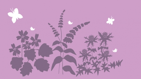 bird and butterfly plants banner illustration