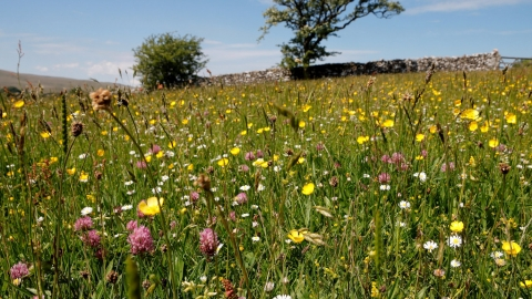 Image of meadows at Bowberhead Farm