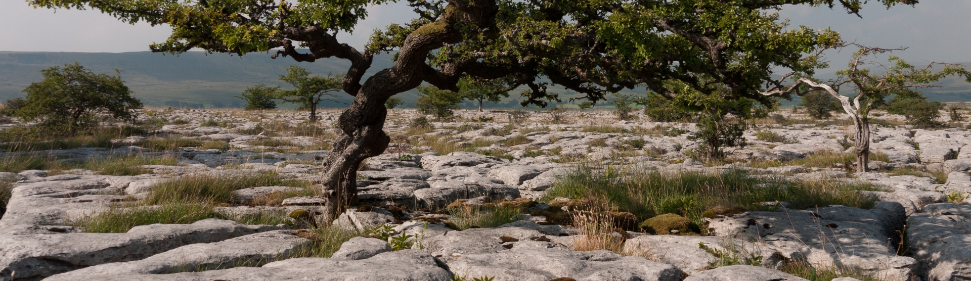 Limestone pavement at Hutton Roof, Cumbria credit Kerry Milligan