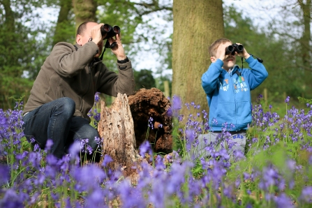 Image of father and son in bluebell wood using binoculars