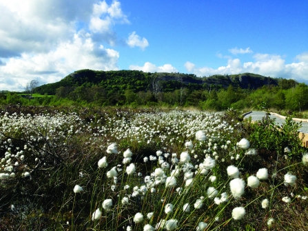 Image of Foulshaw Moss Nature Reserve with cottongrass in foreground. Credit: Bex Lynam
