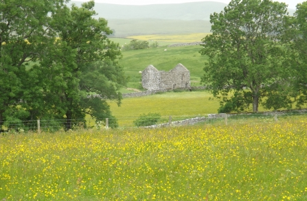 Image of Piper Hole meadow in  Ravenstonedale