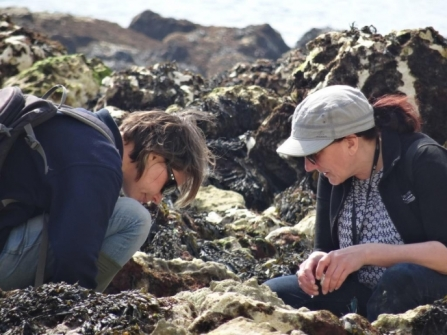 Two women looking for samphire on the sea shore - copyright leon roskilly - kent wildlife trust