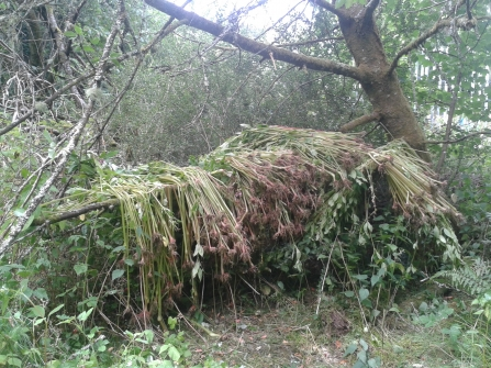 Himalayan balsam removal work at Wreay Woods
