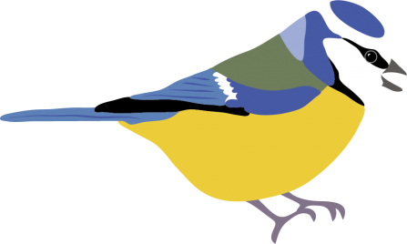 blue tit illustration