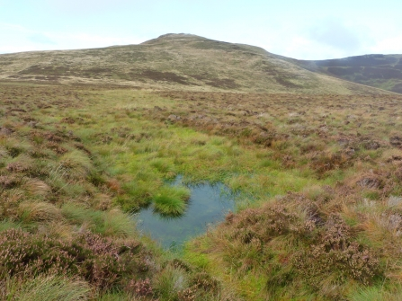 image of blanket bog at loweswater