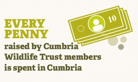 infographic - every penny raised by cumbria wildlife trust members is spent in cumbria
