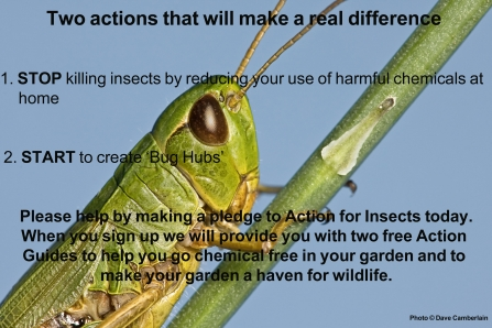 Action for Insects - two actions to make a real difference