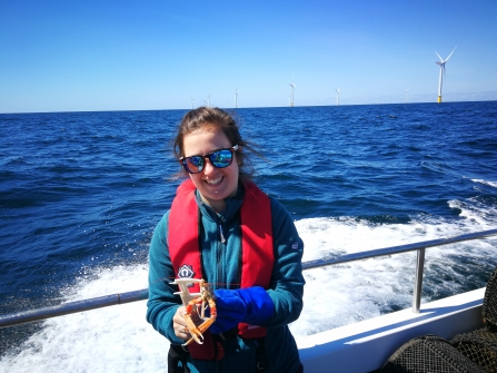 Lydia Tabrizi measuring Dublin Bay prawn