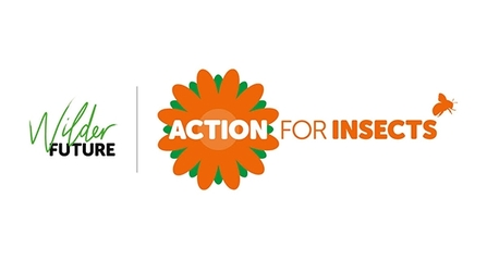 Action for insects banner - The Wildlife Trusts
