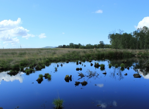 image of peat bog at foulshaw moss nature reserve