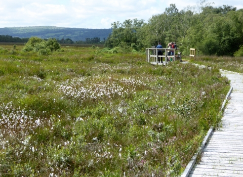 image of a wildlife viewing platform with people at foulshaw moss nature reserve