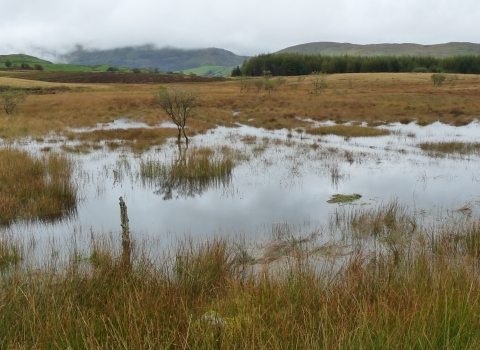 image of Flooding at mickle moss